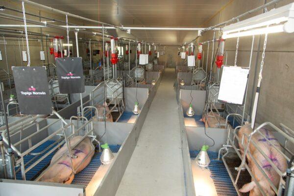 Partnerbedrijven; Varkensbedrijf van der Meijden - Welvaarts - Kraamstal
